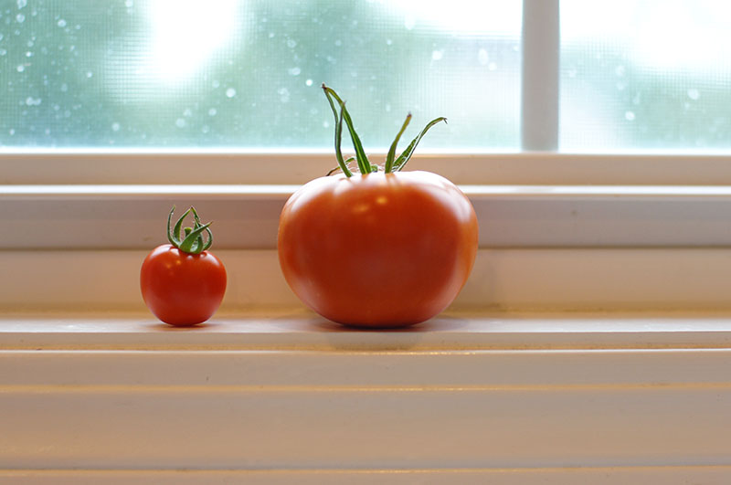 tomatoes_bigandlittle